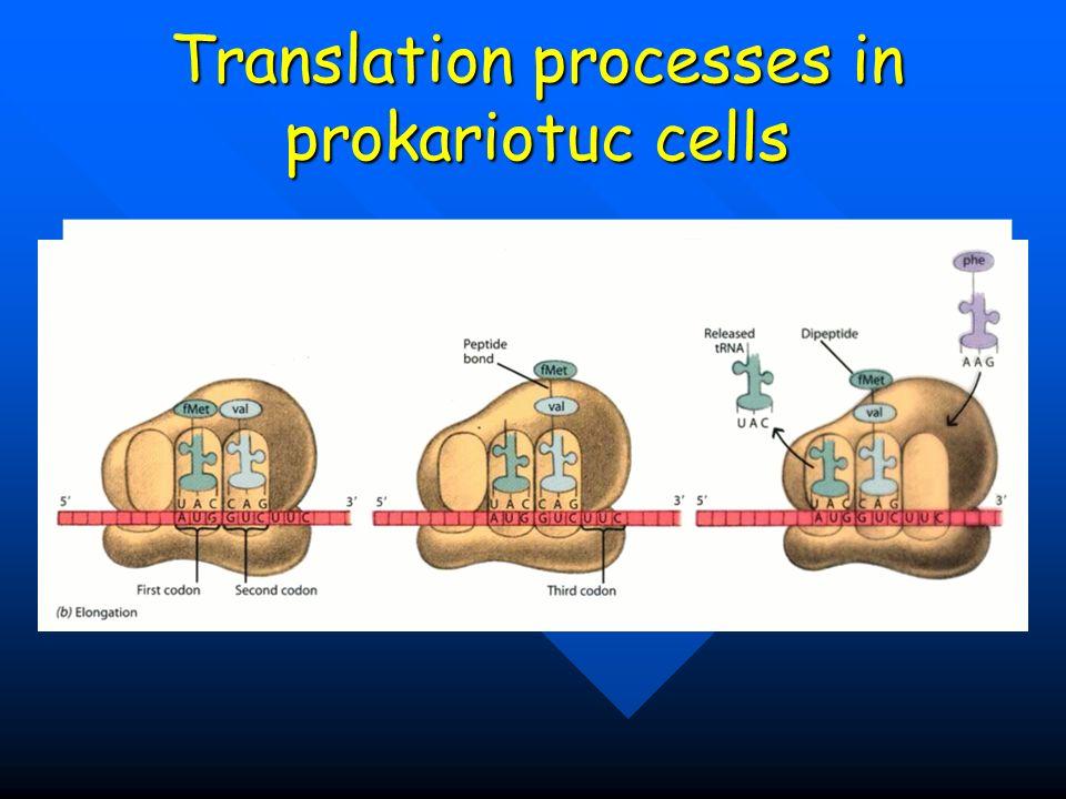 Translation processes in prokariotuc cells