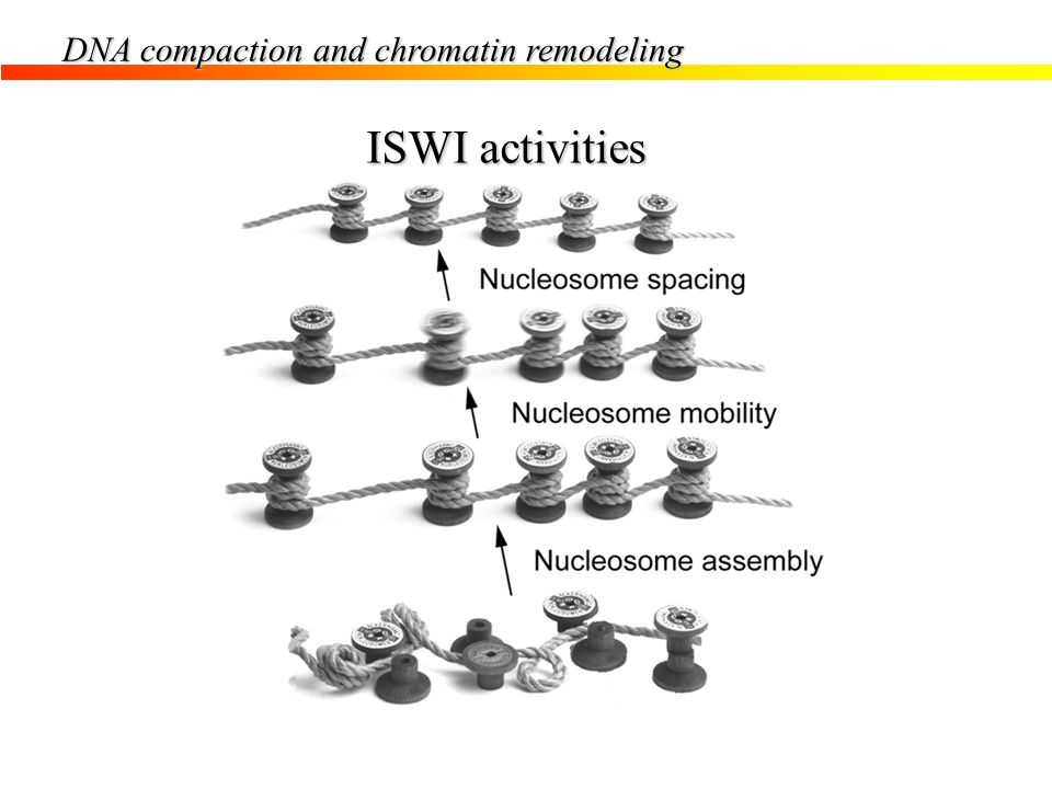 ISWI activities