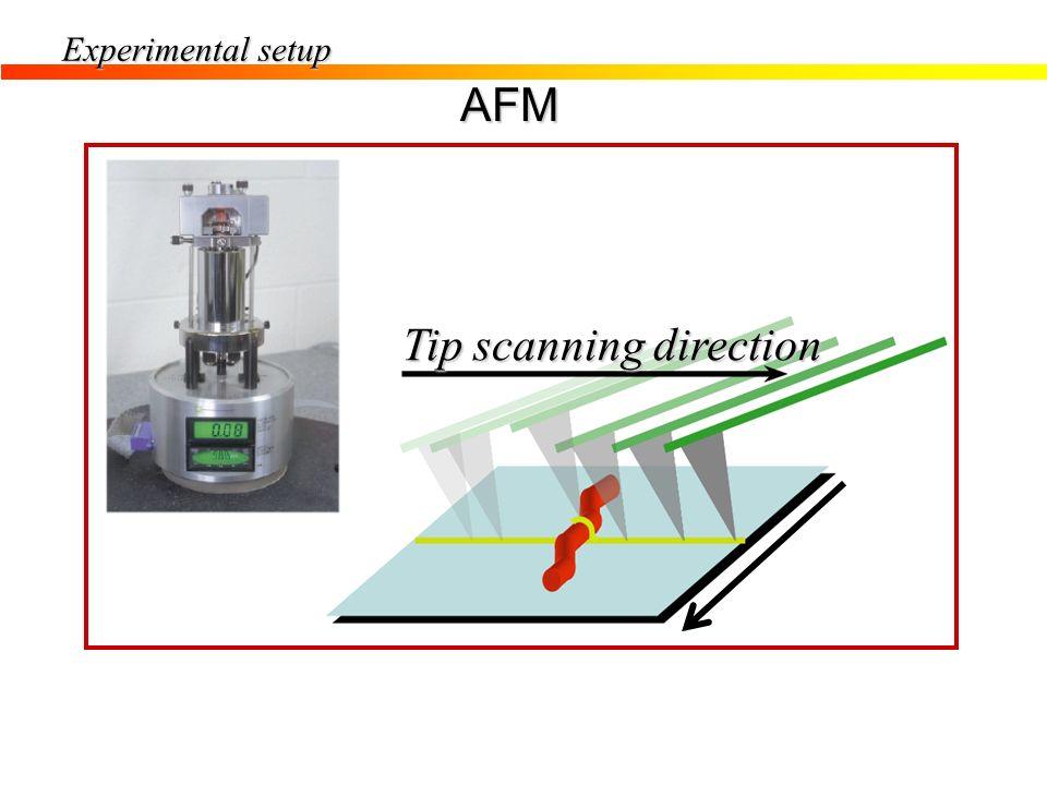 Experimental setup AFM Tip scanning direction