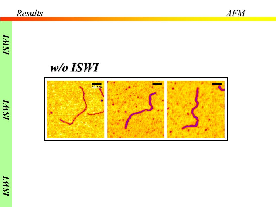 w/o ISWI ResultsAFM ISWI