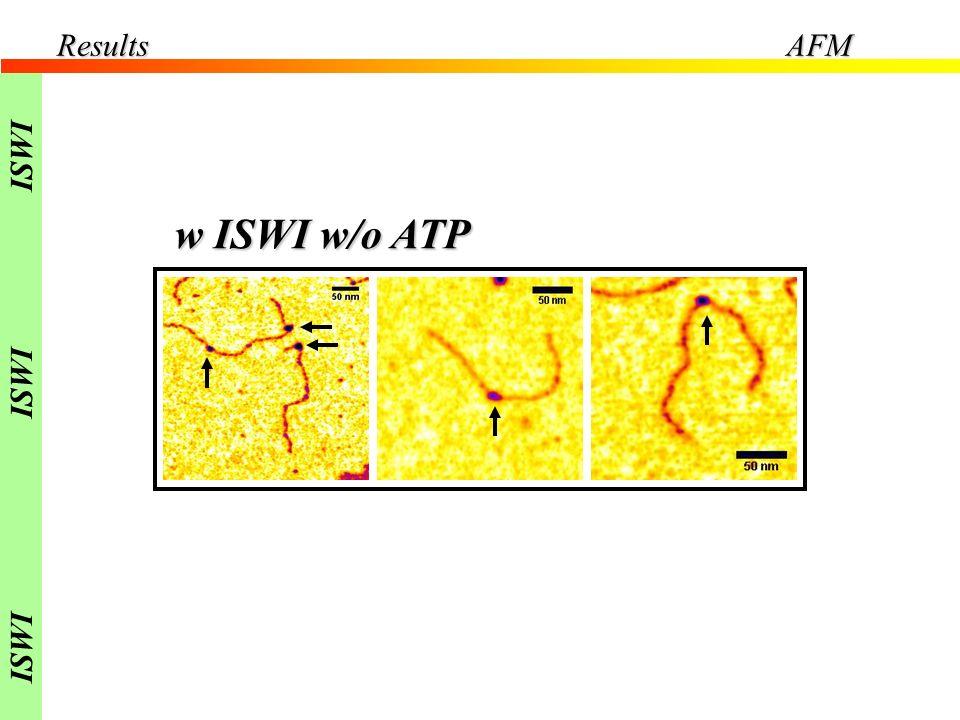 w ISWI w/o ATP ResultsAFM ISWI