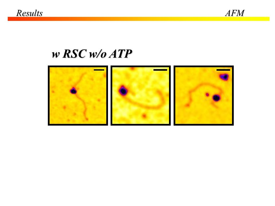 w RSC w/o ATP ResultsAFM