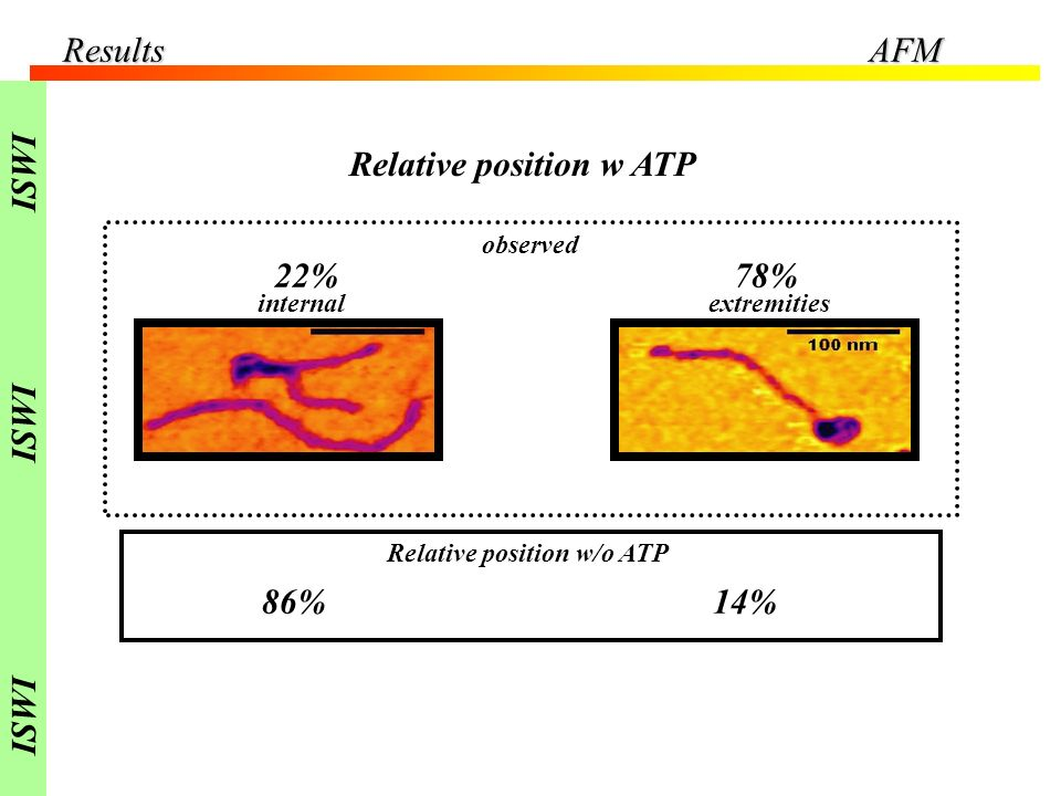 Relative position w ATP 78%22% observed Relative position w/o ATP internalextremities 14%86% ResultsAFM ISWI