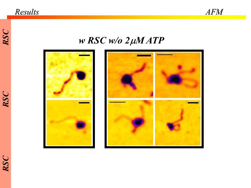 w RSC w/o 2 M ATP ResultsAFM RSC