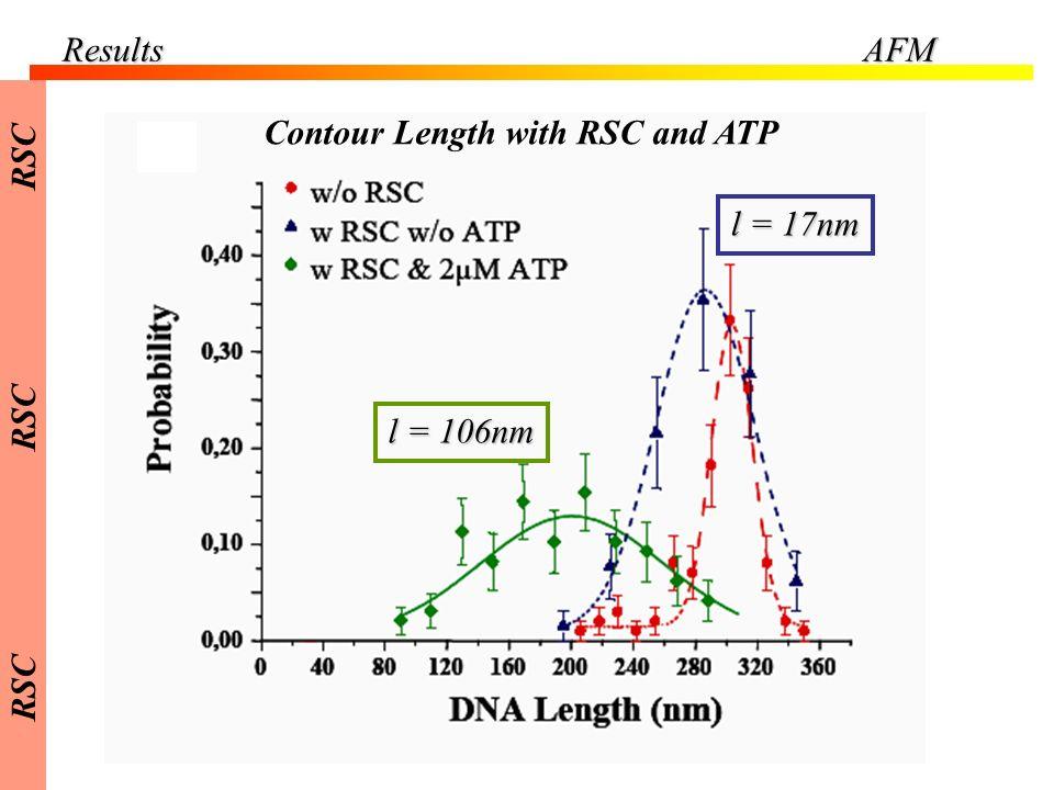 ResultsAFM Contour Length with RSC and ATP l = 106nm l = 17nm RSC