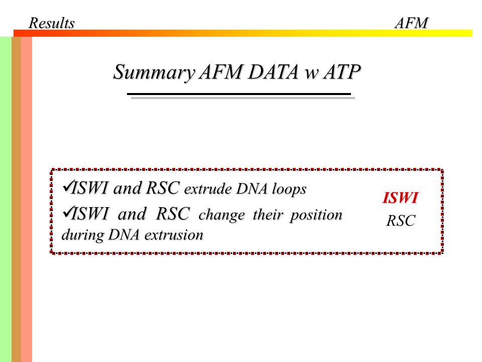 ResultsAFM Summary AFM DATA w ATP ISWI and RSC extrude DNA loops ISWI and RSC extrude DNA loops ISWI and RSC change their position during DNA extrusio