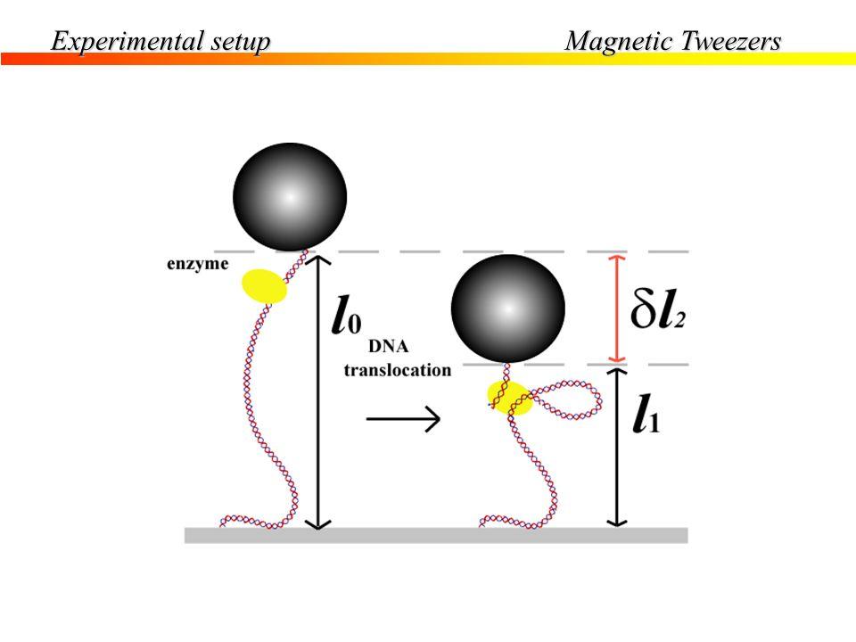 Magnetic Tweezers Experimental setup