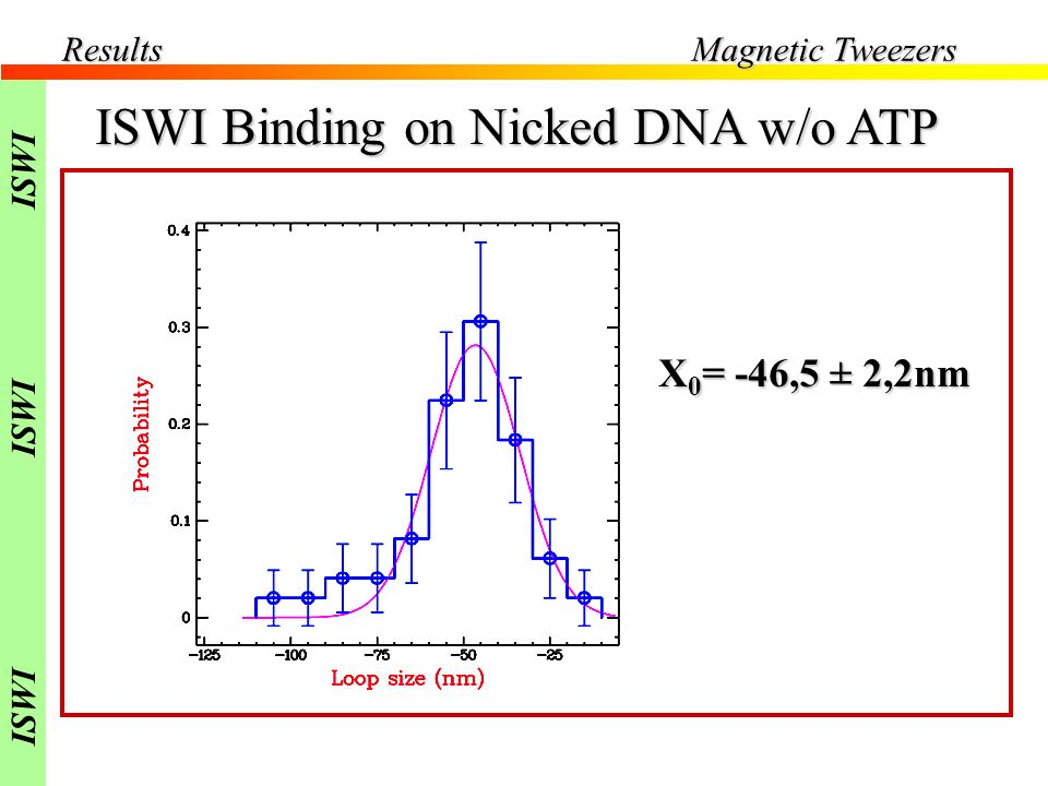 Results Magnetic Tweezers ISWI Binding on Nicked DNA w/o ATP 2pN [ ISWI ] 2nM X 0 = -46,5 ± 2,2nm ISWI