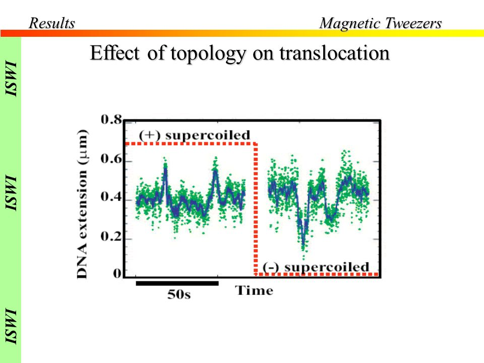 Results Effect of topology on translocation F=0.4pN Magnetic Tweezers ISWI