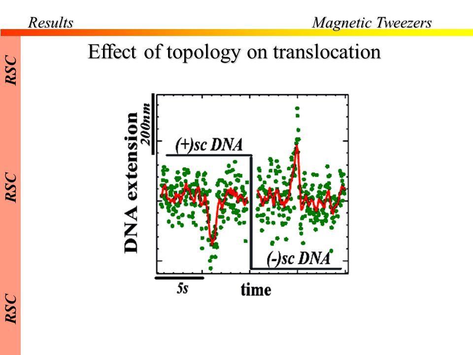 Results Effect of topology on translocation Magnetic Tweezers RSC