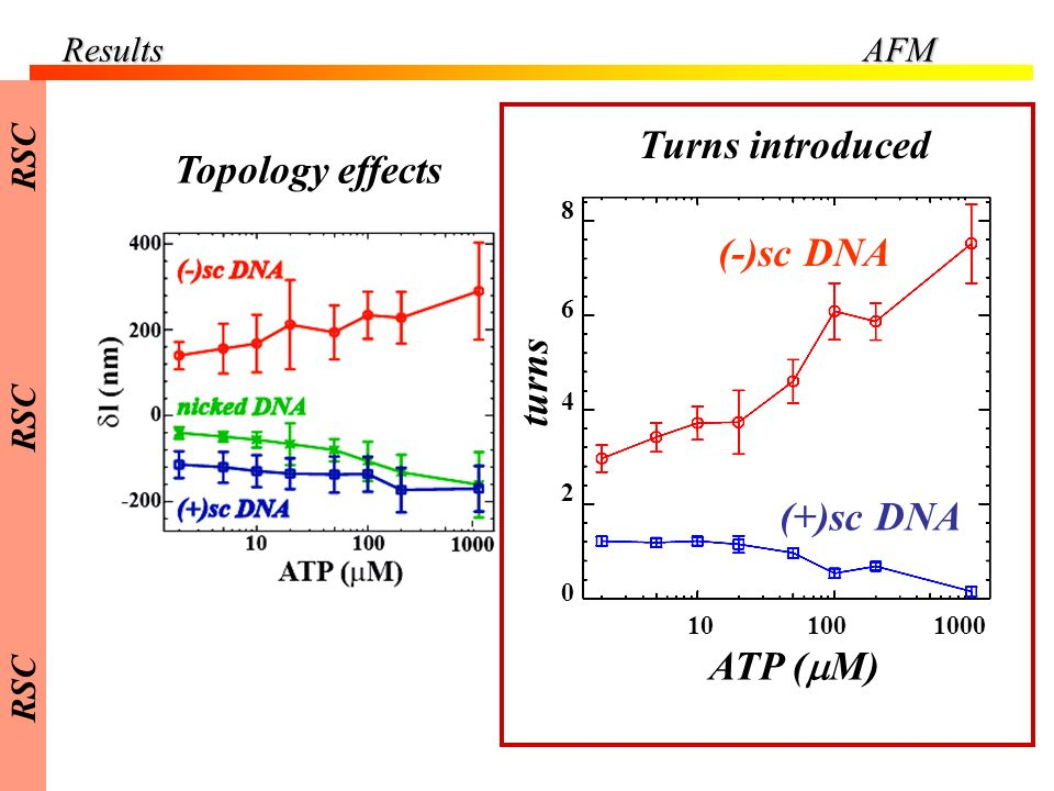 ResultsAFM 101001000 ATP ( M) 0 2 4 6 8 turns (-)sc DNA (+)sc DNA Topology effects Turns introduced RSC