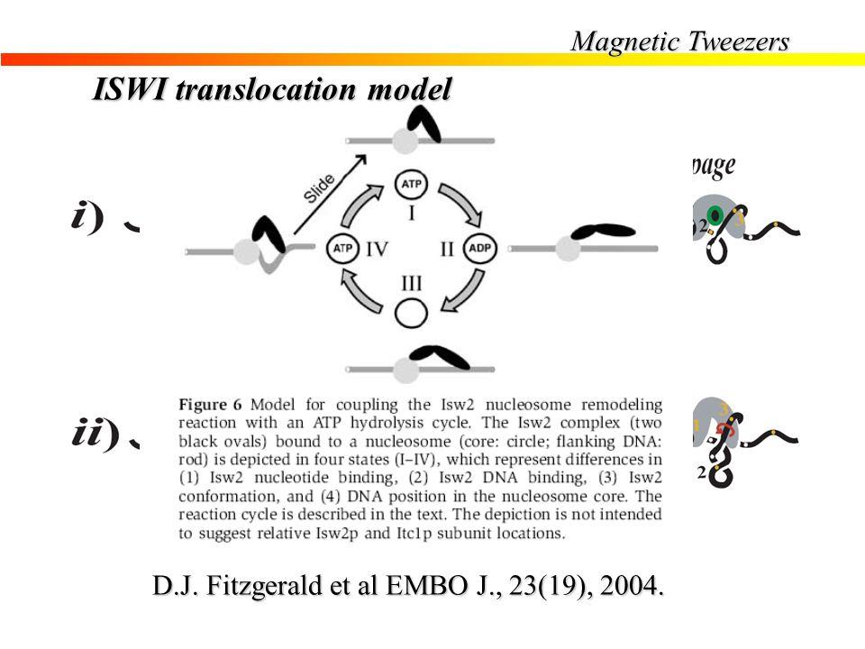 Magnetic Tweezers D.J. Fitzgerald et al EMBO J., 23(19), 2004. ISWI translocation model