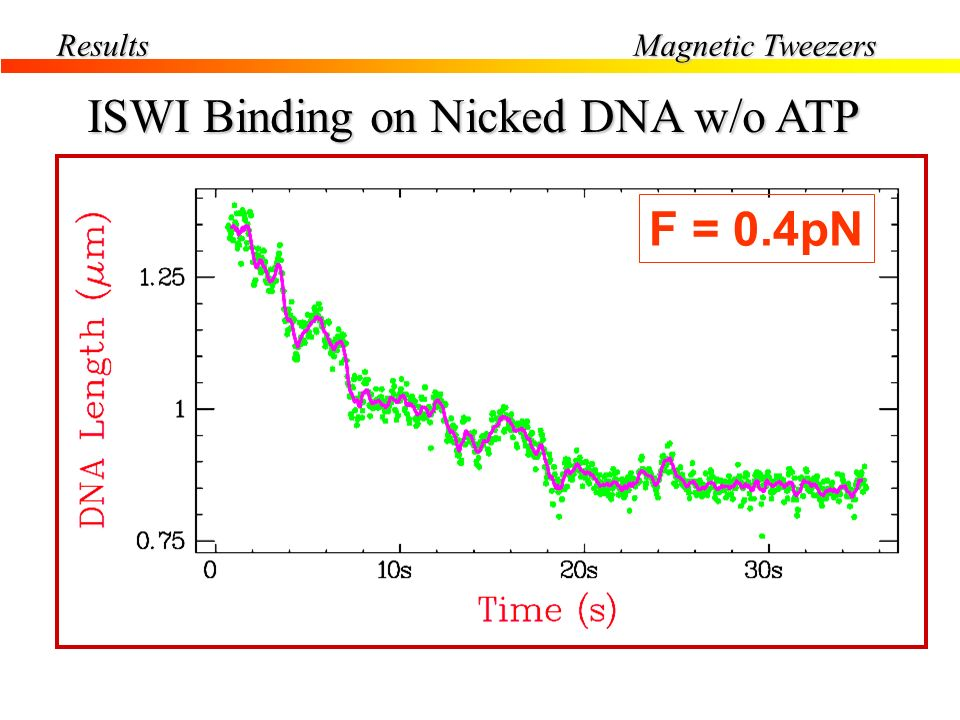 Results Magnetic Tweezers Without ISWI With ISWI F=0.4pN ISWI Binding on Nicked DNA w/o ATP [ ISWI ] 20-25nM F = 0.4pN