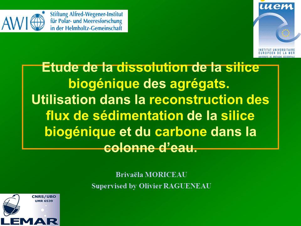 Etude de la dissolution de la silice biogénique des agrégats.