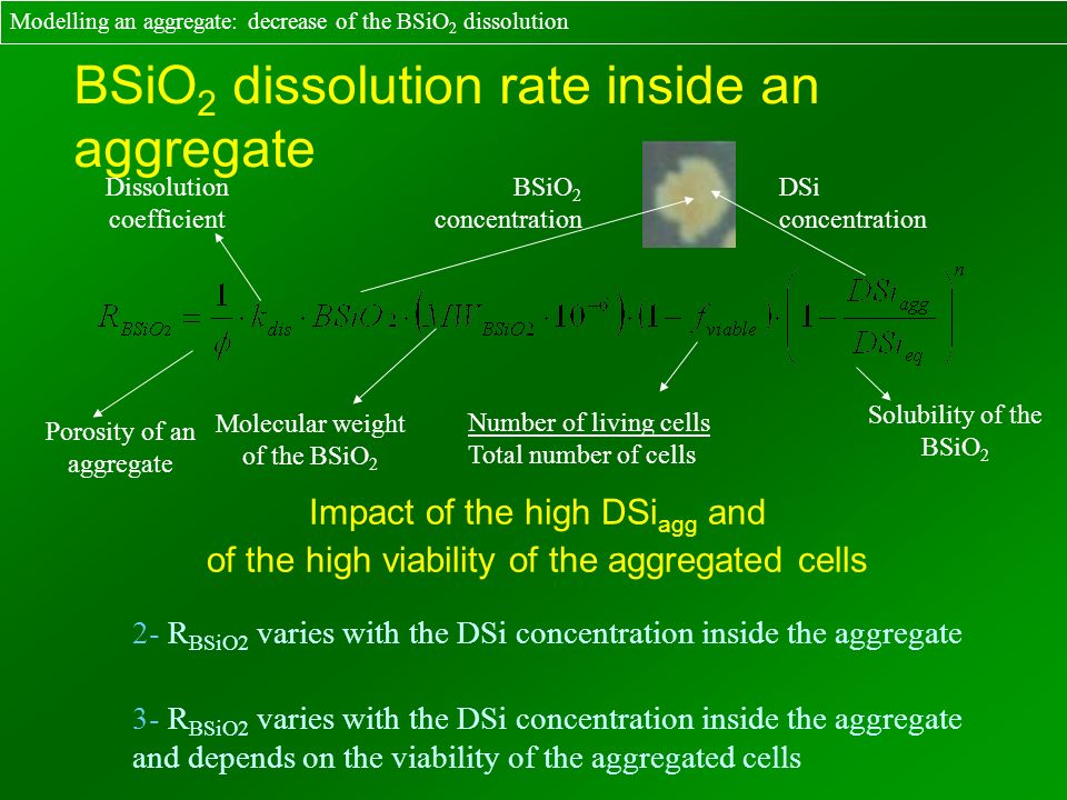 BSiO 2 dissolution rate inside an aggregate Dissolution coefficient Solubility of the BSiO 2 Porosity of an aggregate Molecular weight of the BSiO 2 N