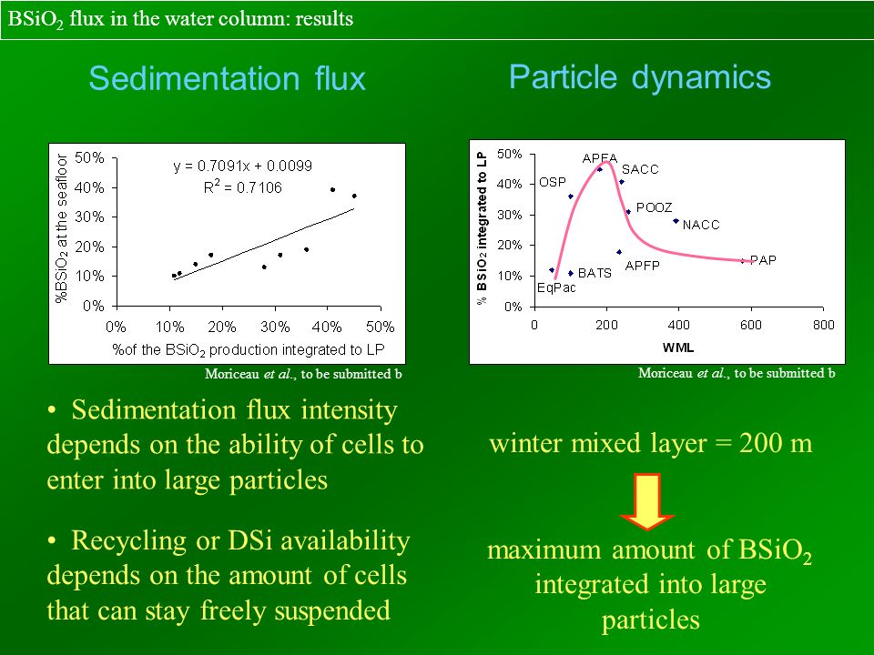 Sedimentation flux intensity depends on the ability of cells to enter into large particles Recycling or DSi availability depends on the amount of cell