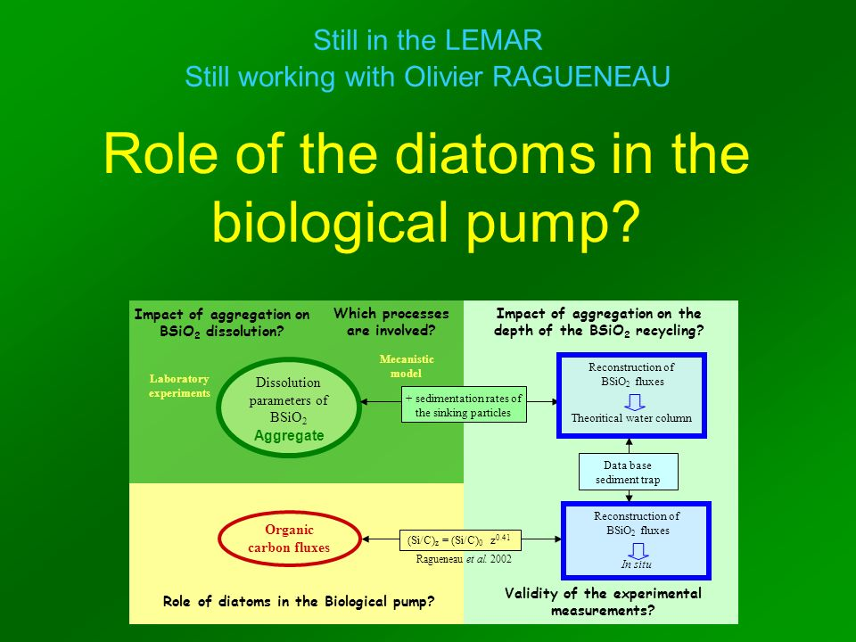 Role of the diatoms in the biological pump? Still in the LEMAR Still working with Olivier RAGUENEAU Organic carbon fluxes Dissolution parameters of BS