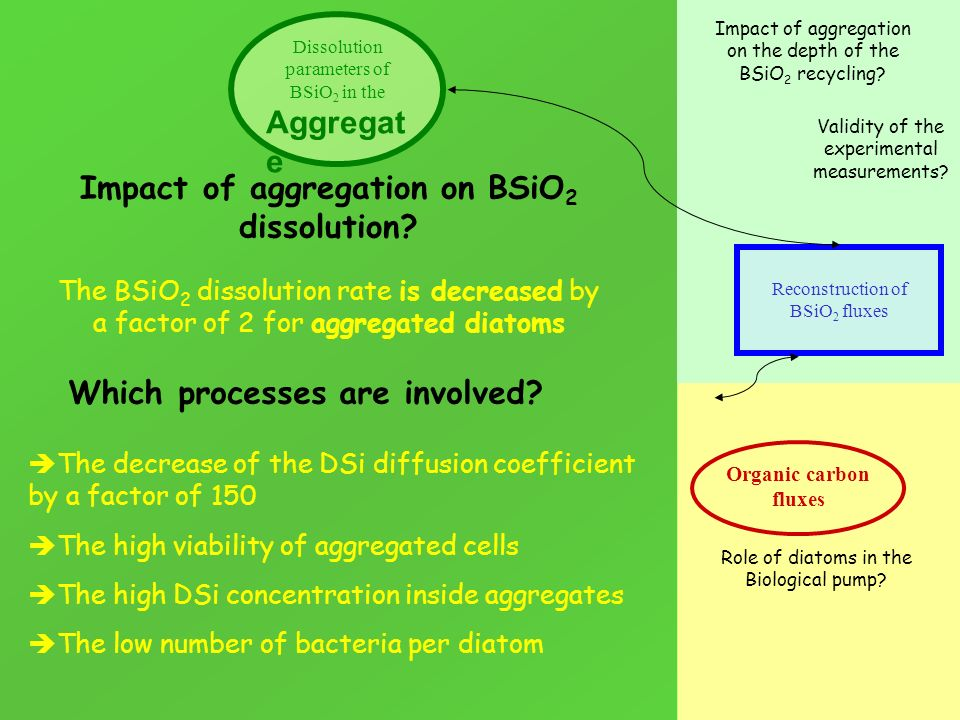 Organic carbon fluxes Reconstruction of BSiO 2 fluxes Impact of aggregation on BSiO 2 dissolution? Impact of aggregation on the depth of the BSiO 2 re