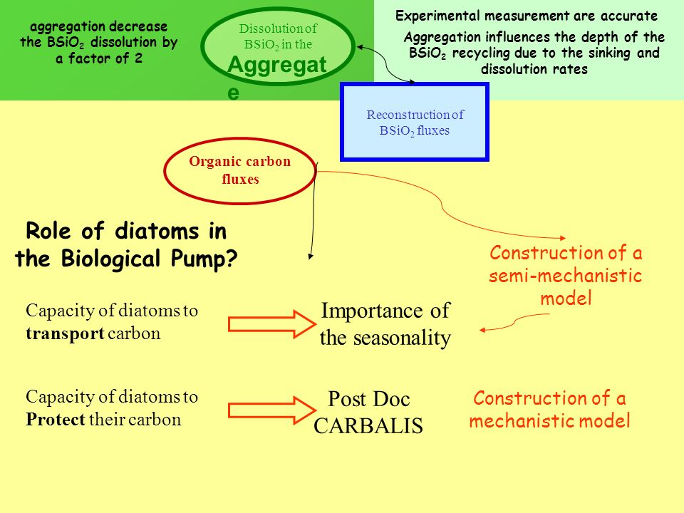 Organic carbon fluxes Reconstruction of BSiO 2 fluxes Experimental measurement are accurate Role of diatoms in the Biological Pump? Capacity of diatom