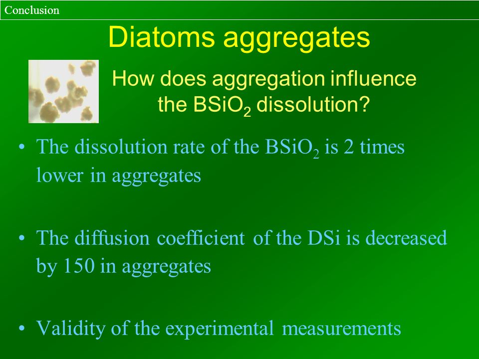 Diatoms aggregates The dissolution rate of the BSiO 2 is 2 times lower in aggregates The diffusion coefficient of the DSi is decreased by 150 in aggre