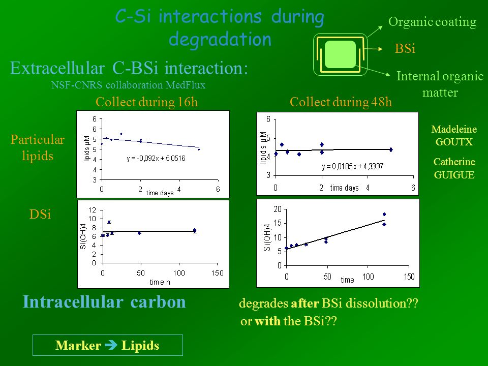 C-Si interactions during degradation Intracellular carbon degrades after BSi dissolution?? or with the BSi?? Marker Lipids Extracellular C-BSi interac