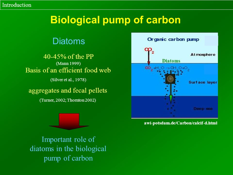 Diatoms Introduction Biological pump of carbon 40-45% of the PP (Mann 1999) aggregates and fecal pellets (Turner, 2002; Thornton 2002) Basis of an eff