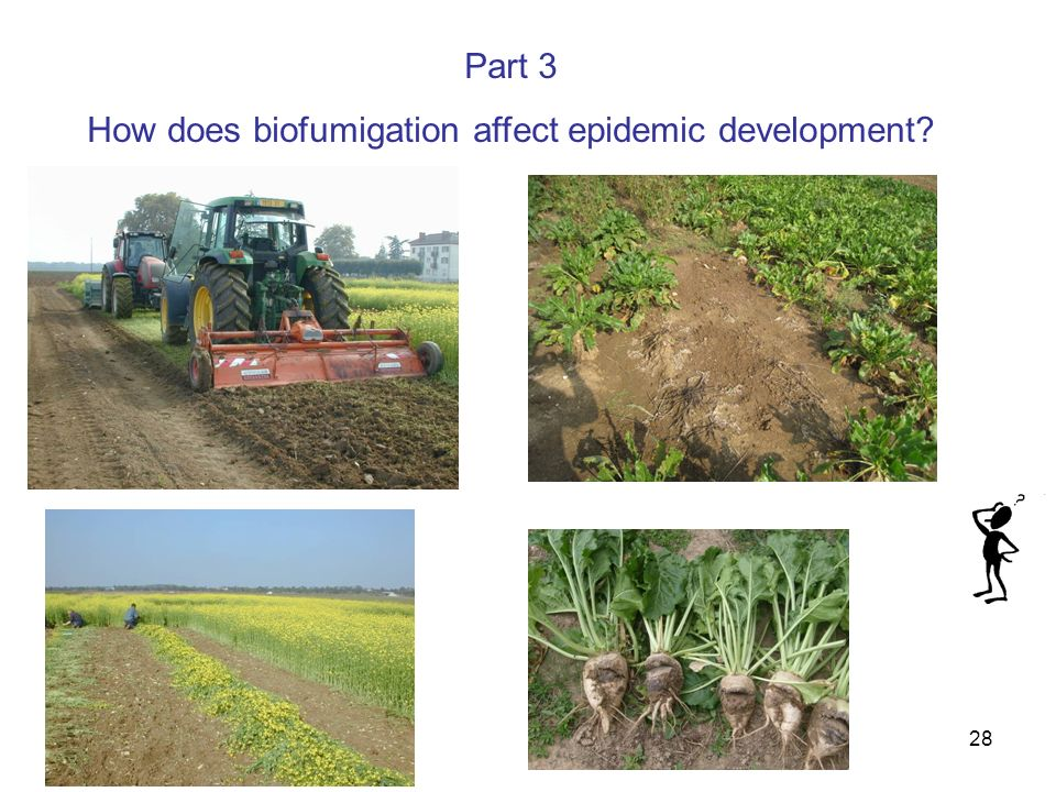 28 Part 3 How does biofumigation affect epidemic development?
