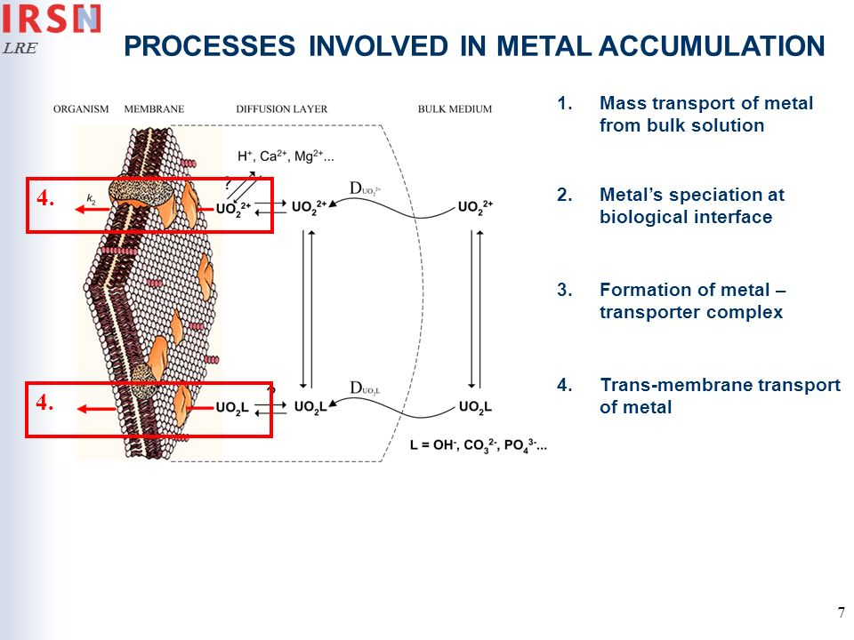 LRE 7 PROCESSES INVOLVED IN METAL ACCUMULATION 1.Mass transport of metal from bulk solution 2.Metals speciation at biological interface 3.Formation of