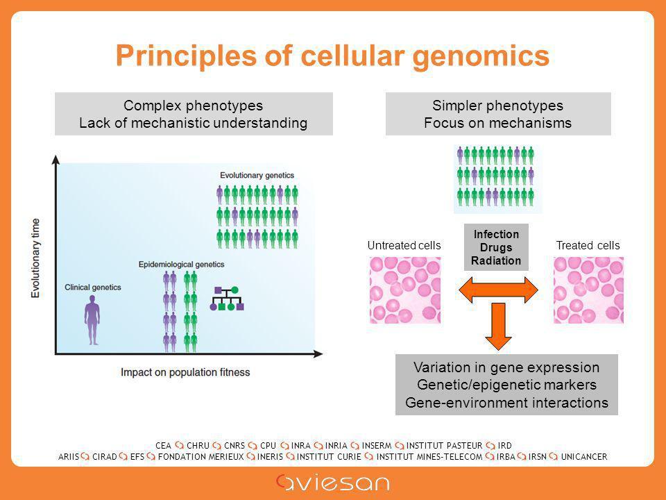 CEACHRUCNRSCPUINRAINRIAINSERMINSTITUT PASTEURIRD ARIISEFSINERISINSTITUT CURIEINSTITUT MINES-TELECOMUNICANCERIRBAIRSNCIRADFONDATION MERIEUX Principles of cellular genomics Infection Drugs Radiation Untreated cellsTreated cells Variation in gene expression Genetic/epigenetic markers Gene-environment interactions Complex phenotypes Lack of mechanistic understanding Simpler phenotypes Focus on mechanisms