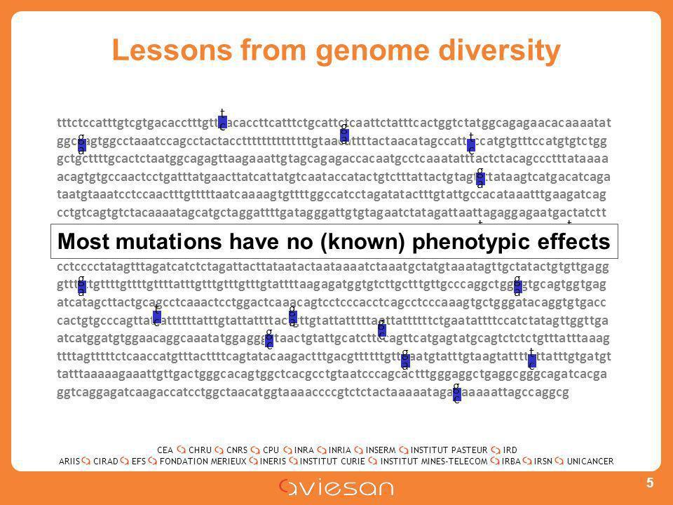 CEACHRUCNRSCPUINRAINRIAINSERMINSTITUT PASTEURIRD ARIISEFSINERISINSTITUT CURIEINSTITUT MINES-TELECOMUNICANCERIRBAIRSNCIRADFONDATION MERIEUX Lessons from genome diversity 5 tttctccatttgtcgtgacacctttgttgacaccttcatttctgcattctcaattctatttcactggtctatggcagagaacacaaaatat ggccagtggcctaaatccagcctactaccttttttttttttttgtaacattttactaacatagccattcccatgtgtttccatgtgtctgg gctgcttttgcactctaatggcagagttaagaaattgtagcagagaccacaatgcctcaaatatttactctacagccctttataaaa acagtgtgccaactcctgatttatgaacttatcattatgtcaataccatactgtctttattactgtagttttataagtcatgacatcaga taatgtaaatcctccaactttgtttttaatcaaaagtgttttggccatcctagatatactttgtattgccacataaatttgaagatcag cctgtcagtgtctacaaaatagcatgctaggattttgatagggattgtgtagaatctatagattaattagaggagaatgactatctt gacaatactgctgcccctctgtattcgtgggggattggttccacaacaacacccaccccccactcggcaacccctgaaacccccac atcccccagcttttttcccctgctaccaaaatccatggatgctcaagtccatataaaatgccatactatttgcatataacctctgcaat cctcccctatagtttagatcatctctagattacttataatactaataaaatctaaatgctatgtaaatagttgctatactgtgttgagg gttttttgttttgttttgttttatttgtttgtttgtttgtattttaagagatggtgtcttgctttgttgcccaggctggagtgcagtggtgag atcatagcttactgcagcctcaaactcctggactcaaacagtcctcccacctcagcctcccaaagtgctgggatacaggtgtgacc cactgtgcccagttattattttttatttgtattattttactgttgtattatttttaattattttttctgaatattttccatctatagttggttga atcatggatgtggaacaggcaaatatggagggctaactgtattgcatcttccagttcatgagtatgcagtctctctgtttatttaaag ttttagtttttctcaaccatgtttacttttcagtatacaagactttgacgttttttgttaaatgtatttgtaagtattttattatttgtgatgt tatttaaaaagaaattgttgactgggcacagtggctcacgcctgtaatcccagcactttgggaggctgaggcgggcagatcacga ggtcaggagatcaagaccatcctggctaacatggtaaaaccccgtctctactaaaaatagaaaaaaattagccaggcg gaga gcgc gcgc gaga gaga gaga gaga tctc tctc tctc gaga gaga gcgc tctc tctc tctc Most mutations have no (known) phenotypic effects