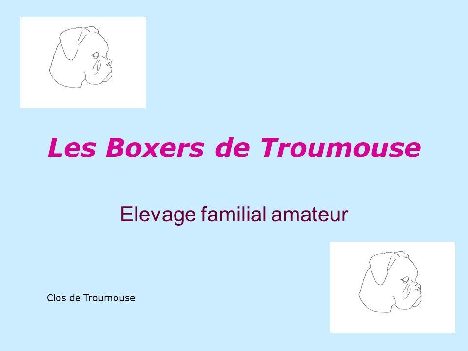 Les Boxers de Troumouse Elevage familial amateur Clos de Troumouse