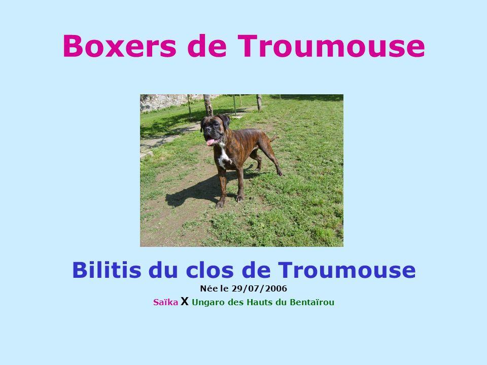 Boxers de Troumouse Bilitis du clos de Troumouse Née le 29/07/2006 Saïka X Ungaro des Hauts du Bentaïrou