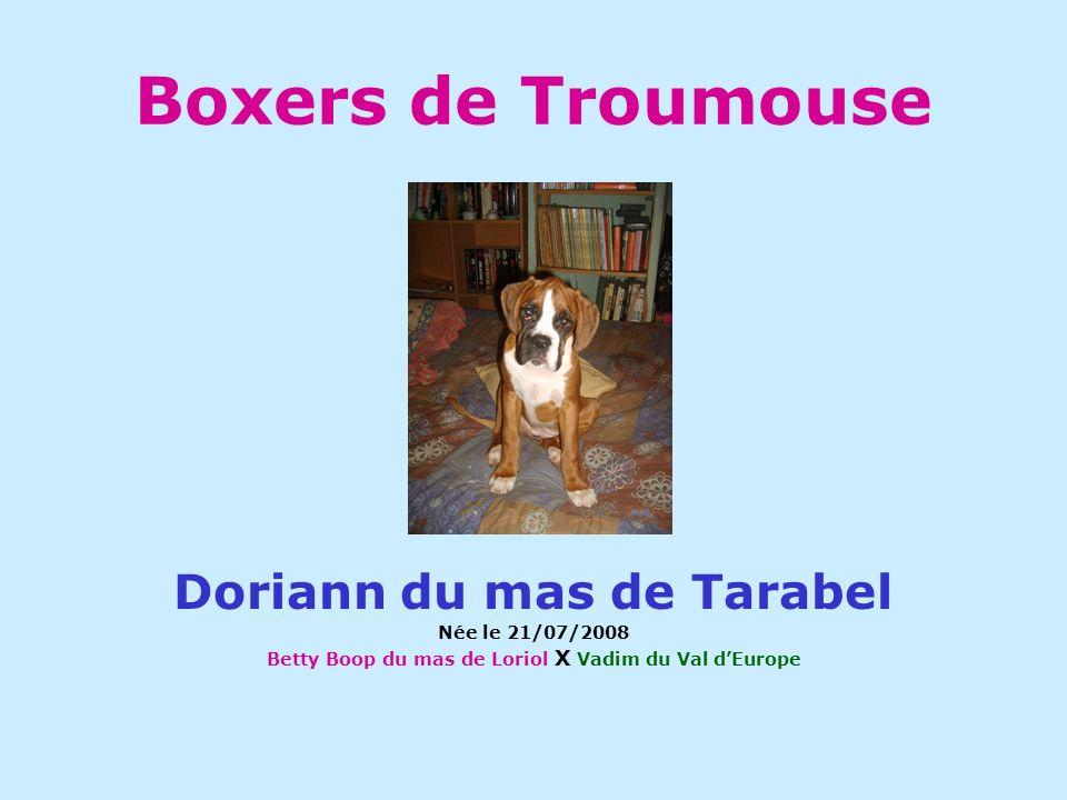 Boxers de Troumouse Doriann du mas de Tarabel Née le 21/07/2008 Betty Boop du mas de Loriol X Vadim du Val dEurope
