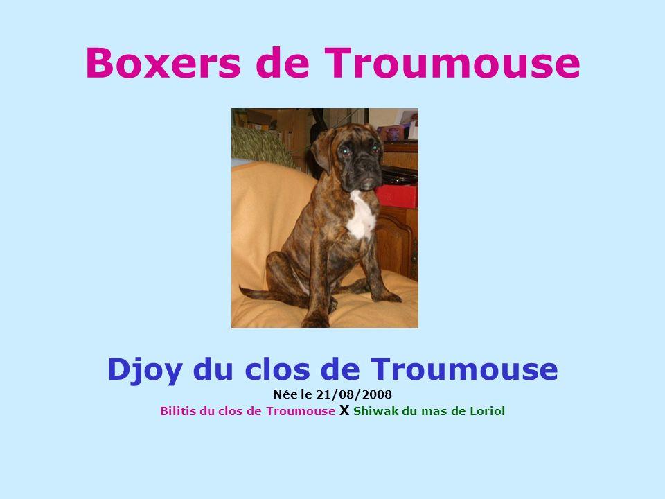 Boxers de Troumouse Djoy du clos de Troumouse Née le 21/08/2008 Bilitis du clos de Troumouse X Shiwak du mas de Loriol