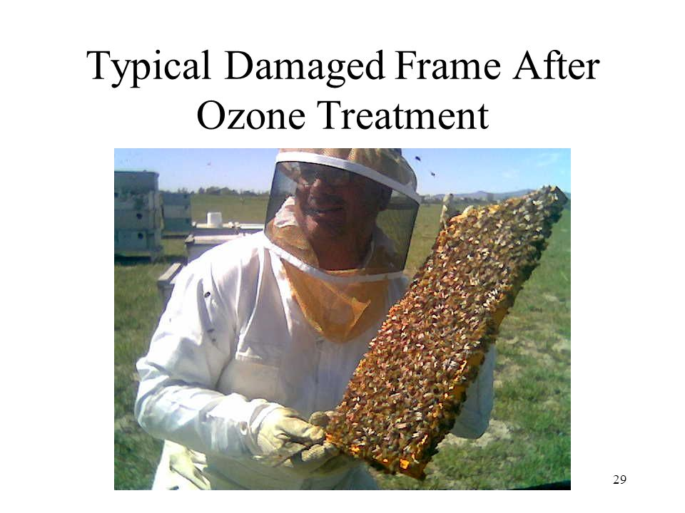 29 Typical Damaged Frame After Ozone Treatment