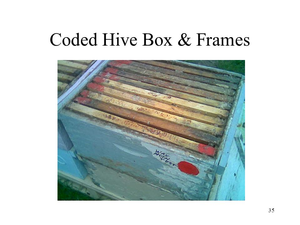 35 Coded Hive Box & Frames