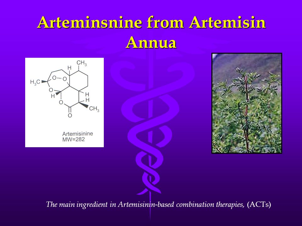 Arteminsnine from Artemisin Annua The main ingredient in Artemisinin-based combination therapies, (ACTs)