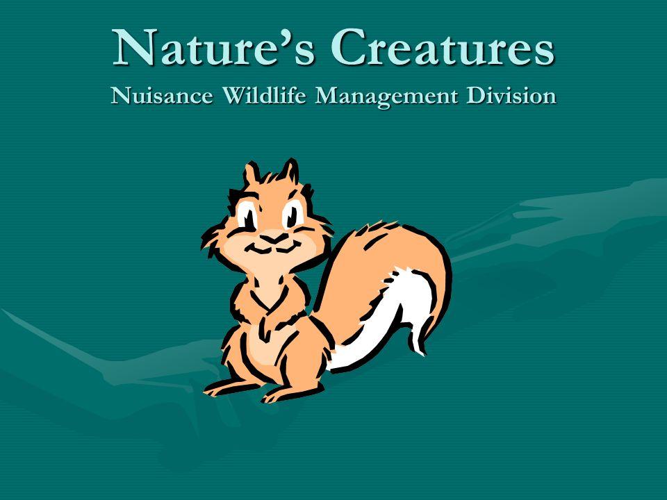 Natures Creatures Nuisance Wildlife Management Division