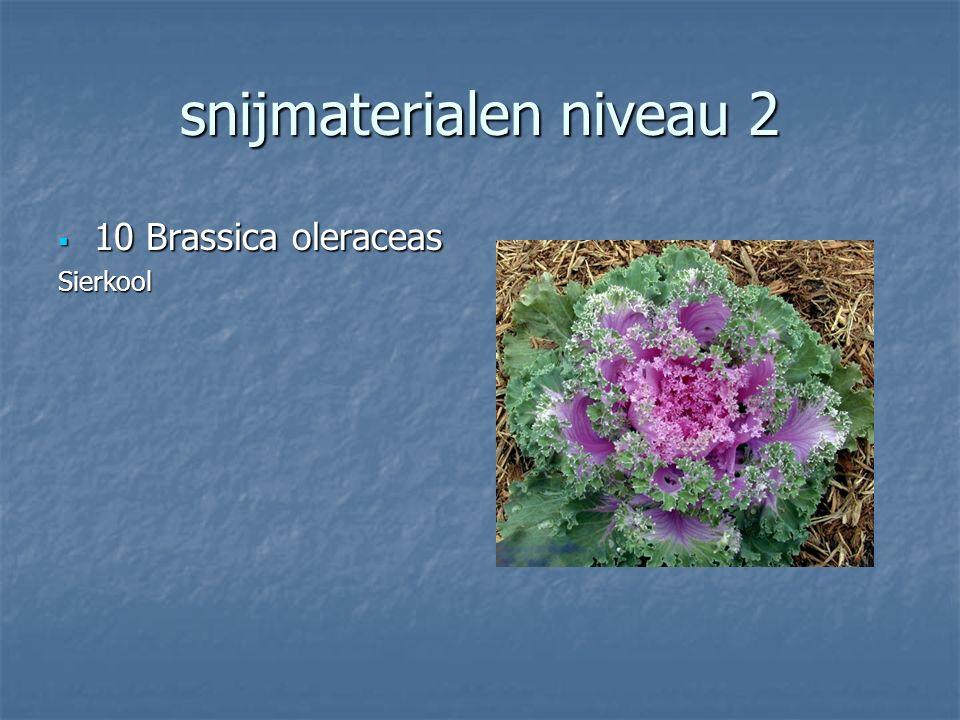 snijmaterialen niveau 2 9 Cucurbita pepo 9 Cucurbita pepoSierkalabas