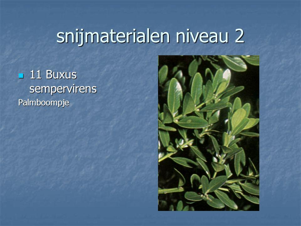 snijmaterialen niveau 2 10 Brassica oleraceas 10 Brassica oleraceasSierkool