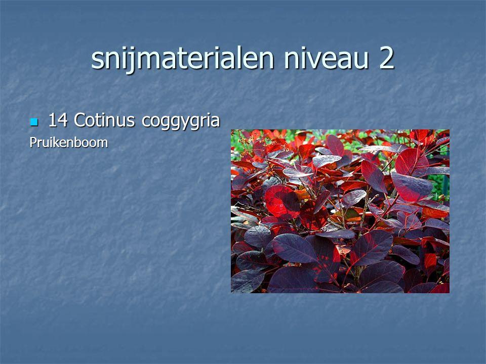snijmaterialen niveau 2 13 Scabiosa stellata 13 Scabiosa stellataSchurfkruid