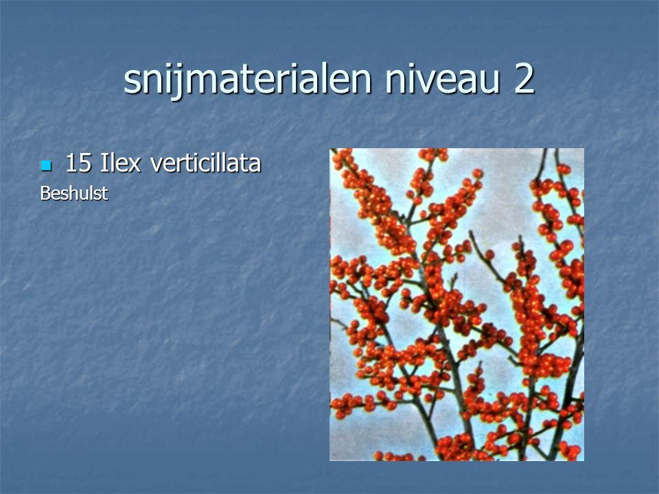 snijmaterialen niveau 2 14 Cotinus coggygria 14 Cotinus coggygriaPruikenboom