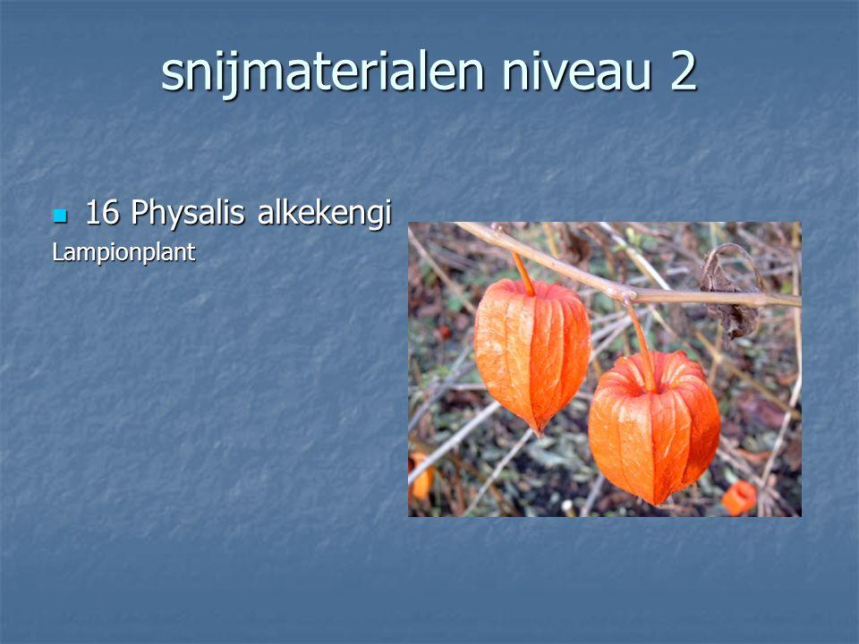 snijmaterialen niveau 2 15 Ilex verticillata 15 Ilex verticillataBeshulst