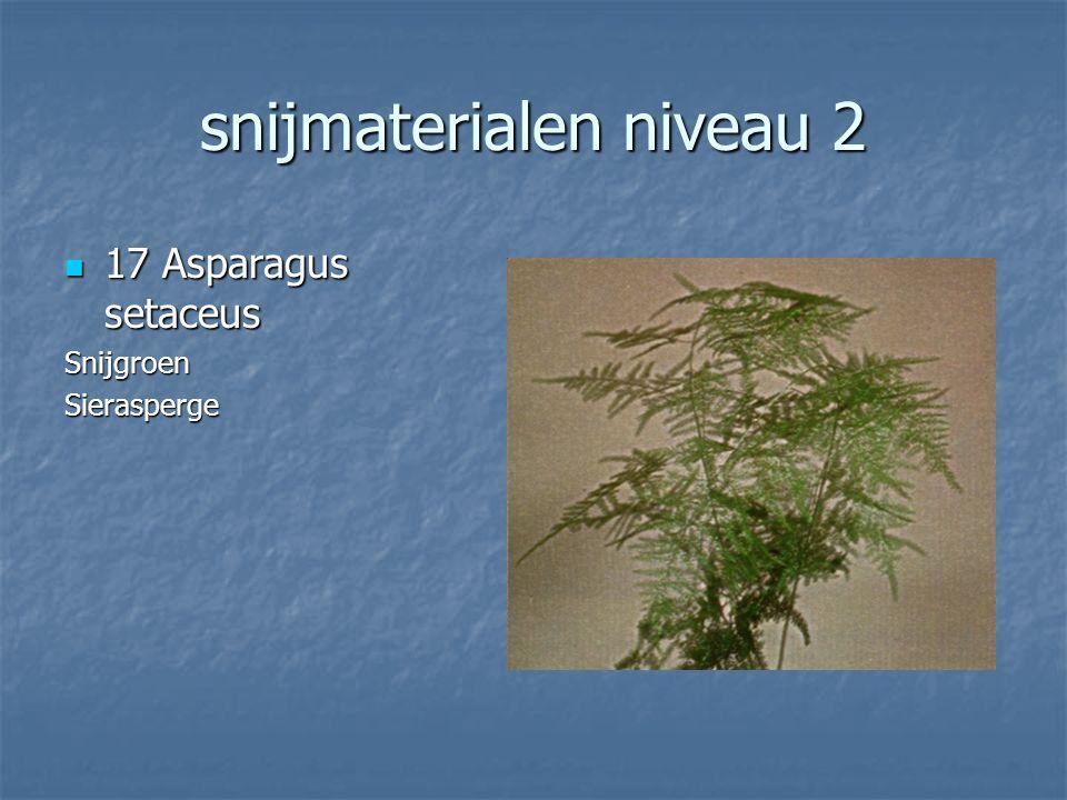 snijmaterialen niveau 2 16 Physalis alkekengi 16 Physalis alkekengiLampionplant