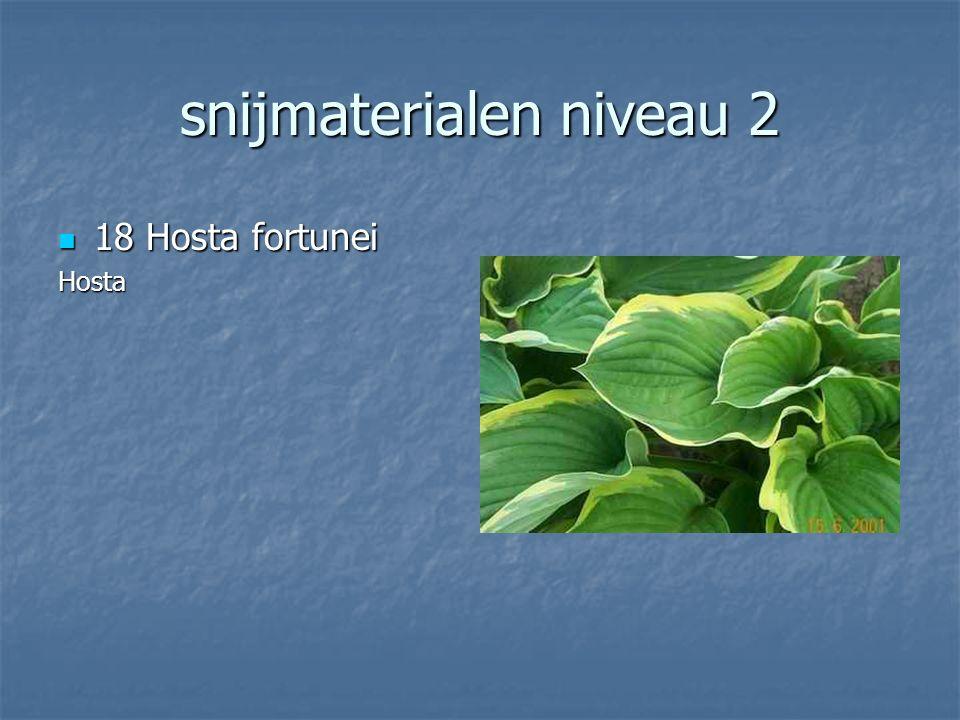 snijmaterialen niveau 2 17 Asparagus setaceus 17 Asparagus setaceusSnijgroenSierasperge