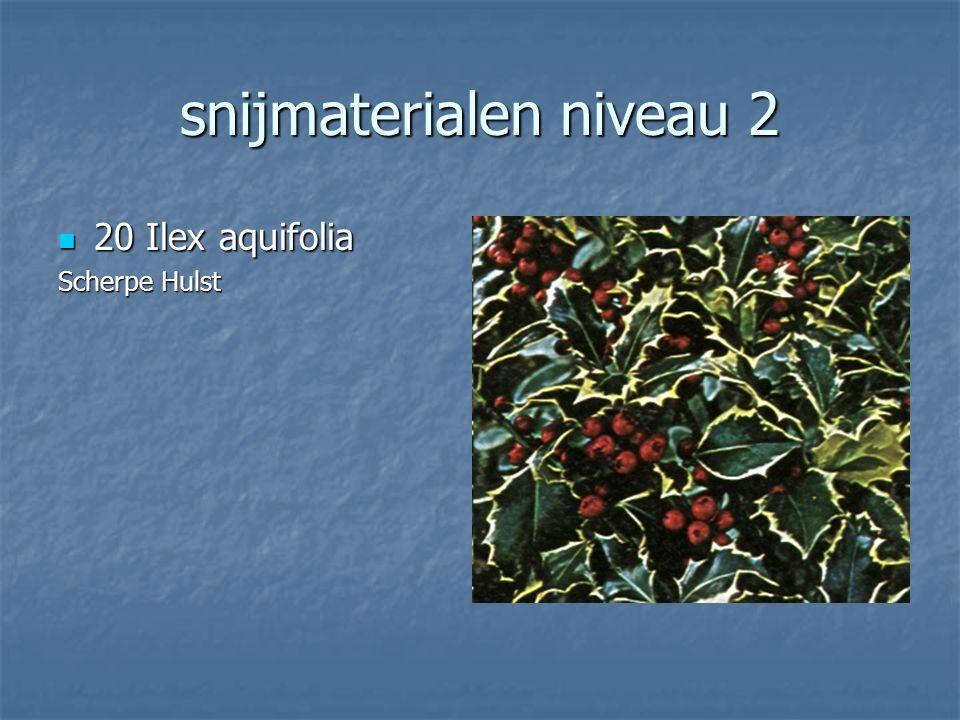 snijmaterialen niveau 2 19 Viburnum opulus Roseus 19 Viburnum opulus RoseusSneeuwbal