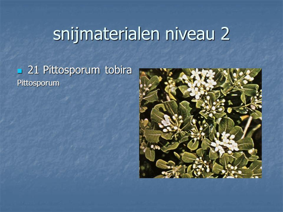 snijmaterialen niveau 2 20 Ilex aquifolia 20 Ilex aquifolia Scherpe Hulst