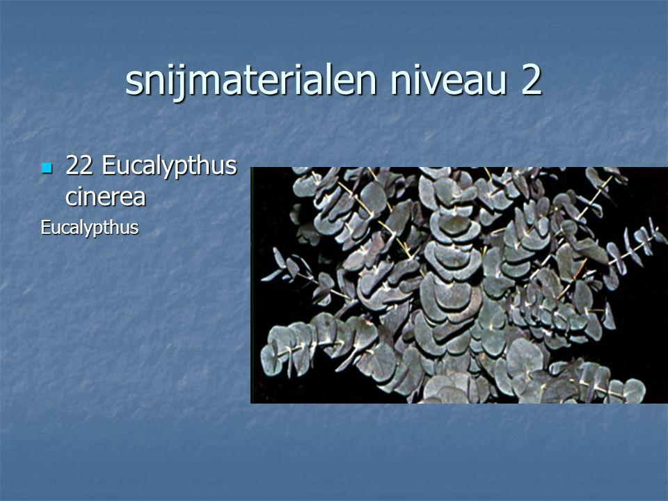 snijmaterialen niveau 2 21 Pittosporum tobira 21 Pittosporum tobiraPittosporum