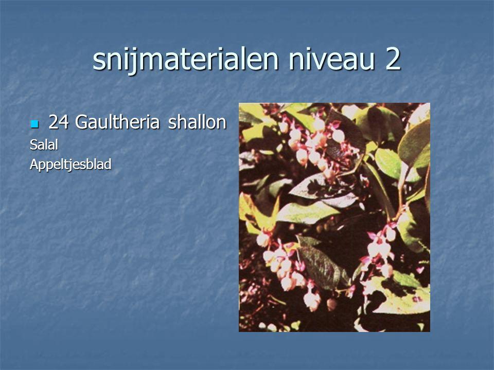 snijmaterialen niveau 2 23 Arachniodes adiantiformis 23 Arachniodes adiantiformisLedervaren