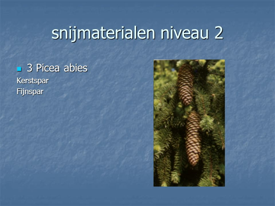 snijmaterialen niveau 2 2 Echinacea purpurea 2 Echinacea purpureaRudbeckia Rode Zonnehoed